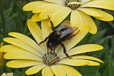 Encourage pollinators to your garden at marshalls seeds for 7194 garden pond